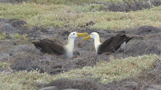 Galapagos Best Adventure Trips