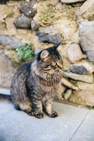 Castellfollit de la Roca, Spanje: Bajo la mirada de los curiosos gatos