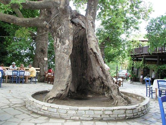 Megalos Prinos, Grèce : Καζαβίτι - Kazaviti