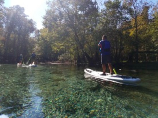 Paddle boarding in a spring on the Santa Fe river near High Springs, Florida