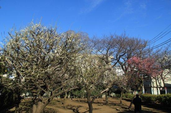 Aburamen Park