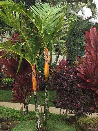 Wyndham Bali Hai Villas: photo1.jpg