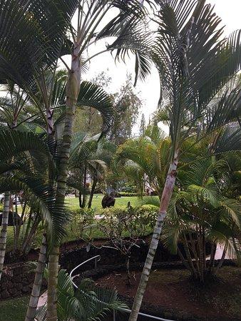 Wyndham Bali Hai Villas: photo3.jpg