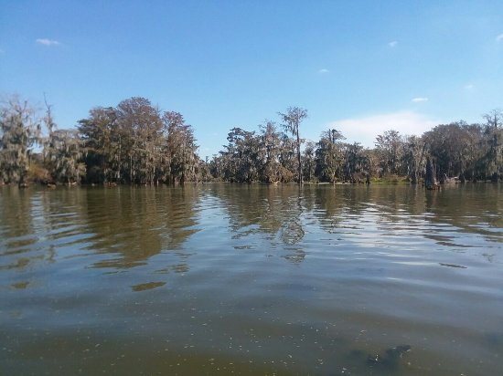 $20 Swamp Tours: New Boat photos