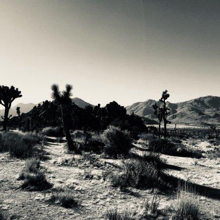 Twentynine Palms, CA: photo0.jpg