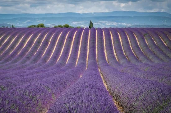 Full-Day Small Group Lavender Tour to...
