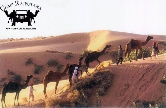 Dunes Safari & Camp Rajputana