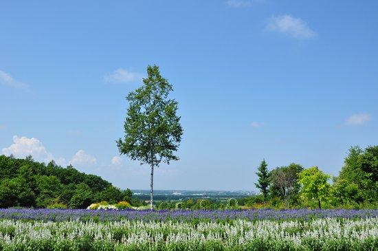 Tokachi Hills