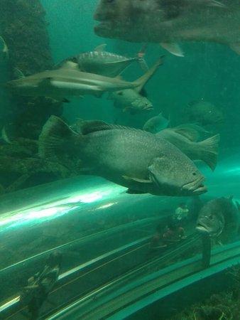 Rayong Aquarium: IMG_20170511_143343_large.jpg