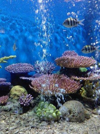 Rayong Aquarium: IMG_20170511_143050_large.jpg