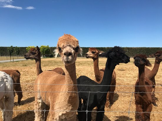 Rangiora, Nueva Zelanda: photo2.jpg