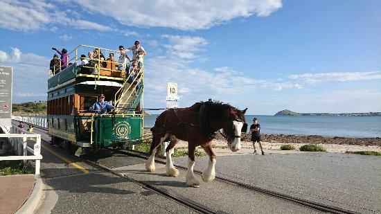 Victor Harbor, ออสเตรเลีย: 感覺馬拉得很吃力