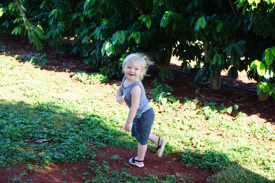 Kauai Coffee Company: Mays loves to explore