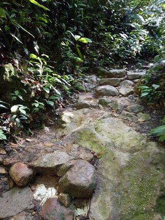 Gunung Lambak: trail