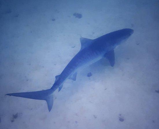 Coral Bay, Australia: IMG_20171202_181054_197_large.jpg