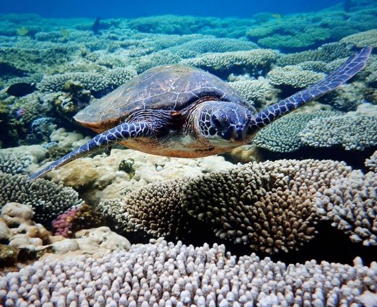 Coral Bay, Australia: IMG_20171202_181054_041_large.jpg