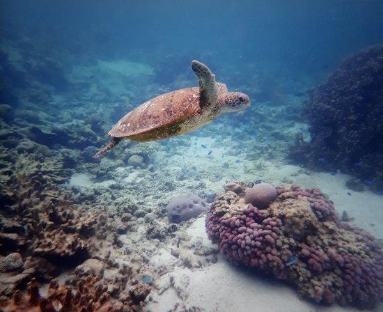 Coral Bay, Australia: 20171202_180211_large.jpg
