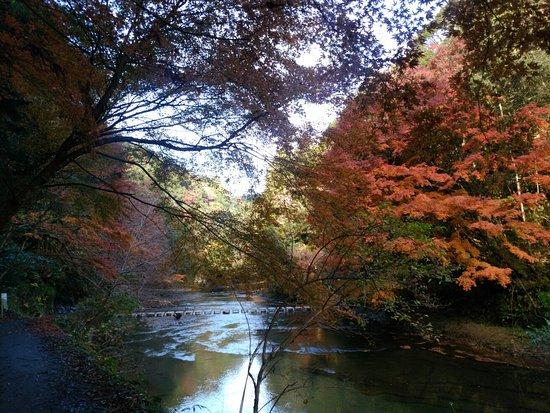 Otaki-machi 사진