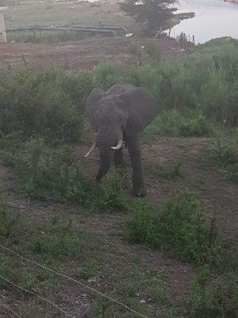 Buckler's Africa: 20171126_182911_large.jpg