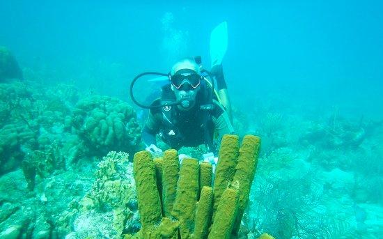 Centre De Plongee Des Ilets: Plongée dans la réserve Cousteau.