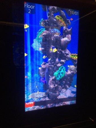 Crowne Plaza Tel Aviv Beach: screen in the lift