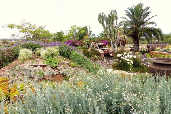 Addo, South Africa: Our Wild Flower Garden