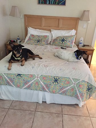 Ambrosia Key West Tropical Lodging: Rocky & Iñaki Chilling in the room...