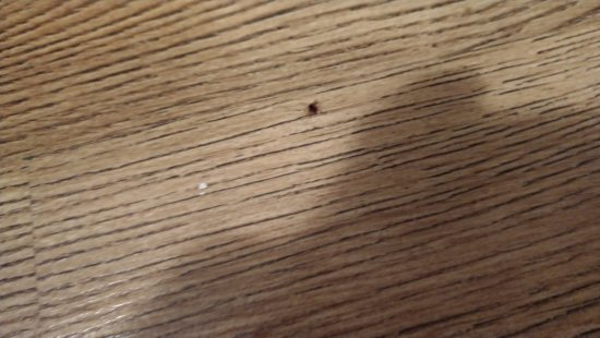 Fraser Residence Budapest: One small tick was found on the floor the day we checked out. Glad no one was bitten.