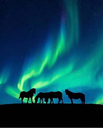 Northern Lights And Icelandic Horses Picture Of Iceland