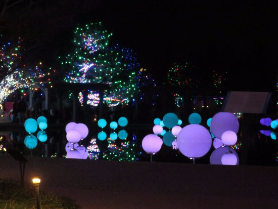 Denver Botanic Gardens: Blossoms Of Light