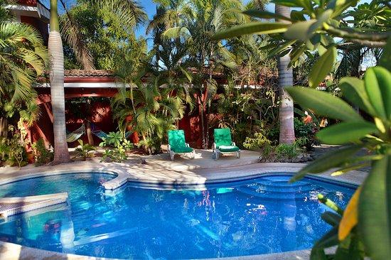 Playa Grande, Costa Rica: Swimming pool