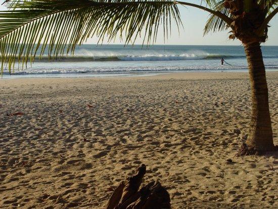 Hotel RipJack Inn: Palm Trees
