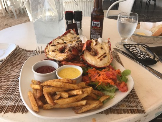 Lobster Alive: photo1.jpg