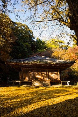 Bungotakada, Japan: 銀杏に照らされて金色に輝いて見えます