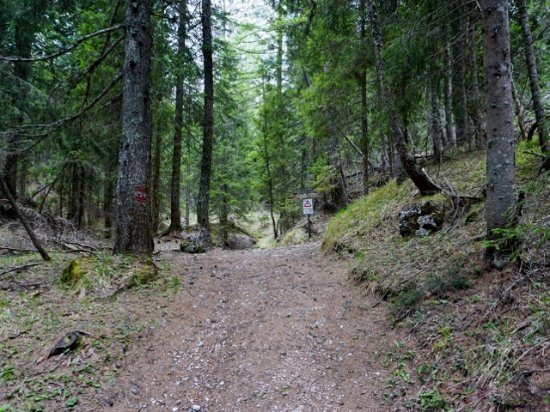 Cortina D'Ampezzo, Italia: Passo Posporcora