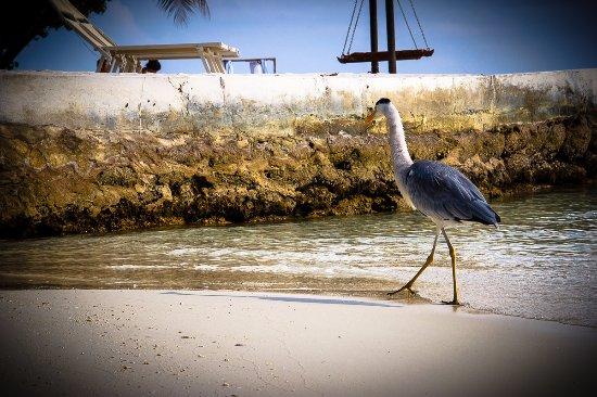 Ảnh về Maayafushi Island