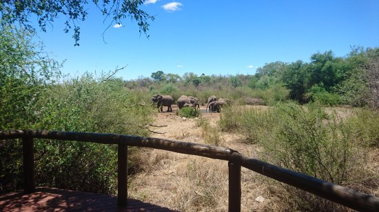 Madikwe Game Reserve, South Africa: View of the waterhole from our villa