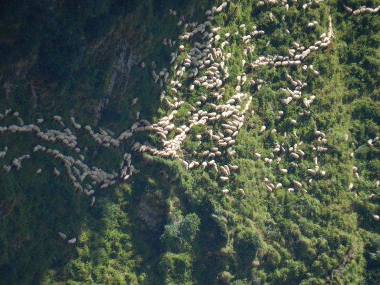 Alagna Valsesia, Italien: pecore al colle Mud