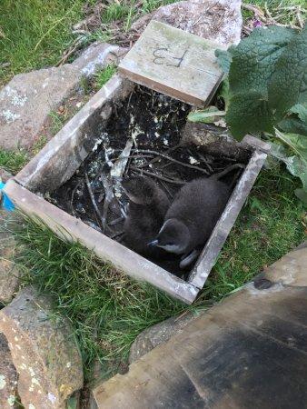 Pohatu Penguin Habitat: penguins in their nesting boxes