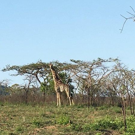 Tomjachu Bush Retreat: photo5.jpg