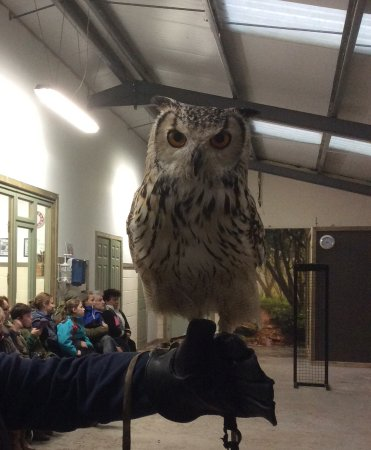 Wem, UK: One of the beautiful owls I got to experience up close.