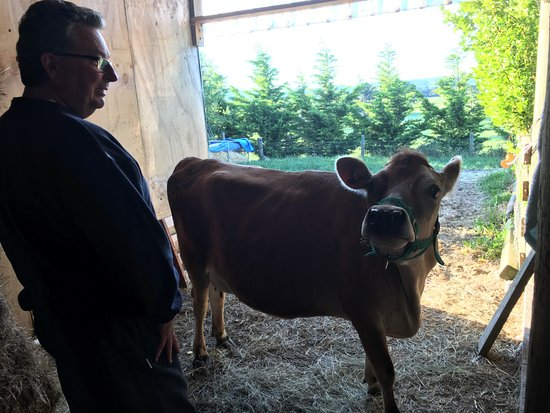 Cheviot, Nueva Zelanda: Gary with Poppy - one of the jersey cows in their herd!