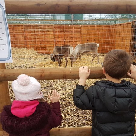 Burton upon Trent, UK: The Reindeers at Planters were fab! Also various pets to look at kept my youngest occupied!