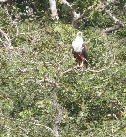 Shimba Hills National Reserve, Quênia: One of the fish eagle couple