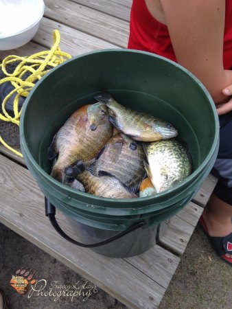 Park Rapids, MN: Nice Bluegill Catch