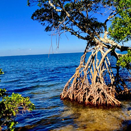 Palmetto, FL: photo1.jpg