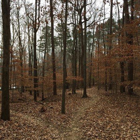 Greensboro, Carolina del Norte: photo2.jpg