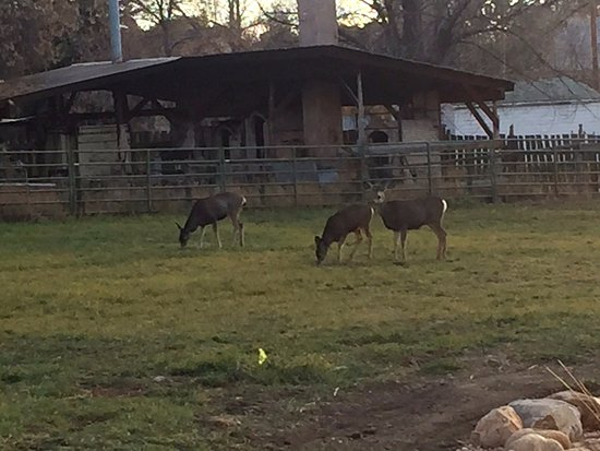 Spring City, UT: Deer at the Osborne Inn