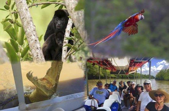Fauna costarricense: excursión...