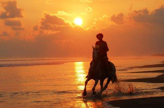 Horseback Riding Adventure From Quepos